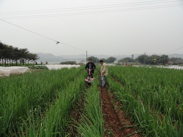 Agricultural mechanization in our country to promote rapid development as a whole